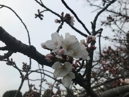 20190325-machida-tennis-18.JPG