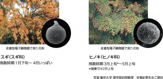 花粉.jpg