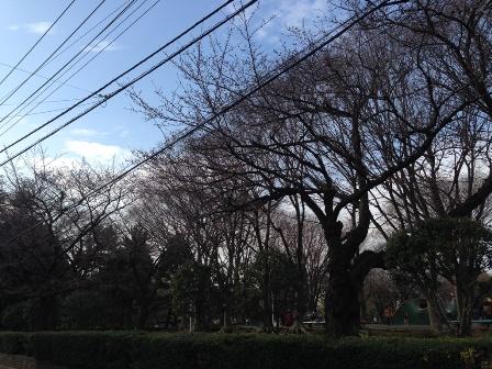 20140326鹿沼公園-001.JPG