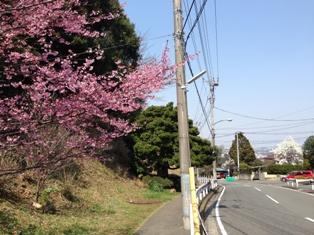 20140328nakayama-haru.JPG