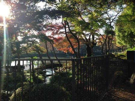 20151129鹿沼公園-014.JPG