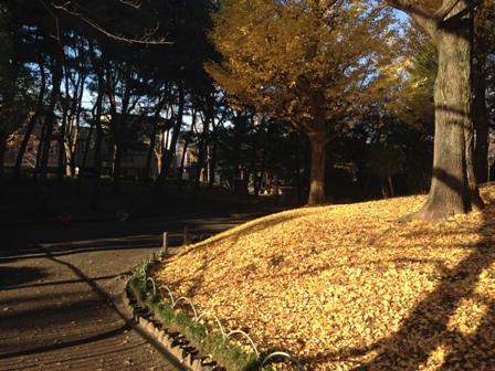 20151129鹿沼公園-027.JPG