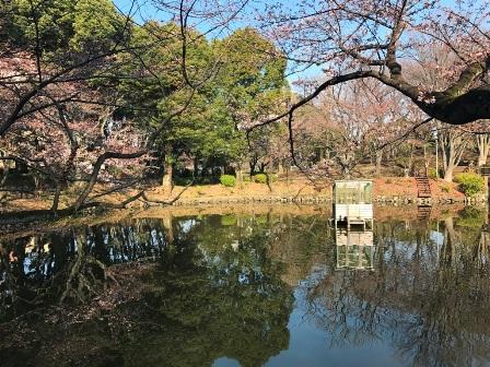 20170330-sakura-04.JPG