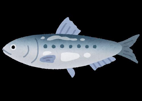 fish_sakana_iwashi.png