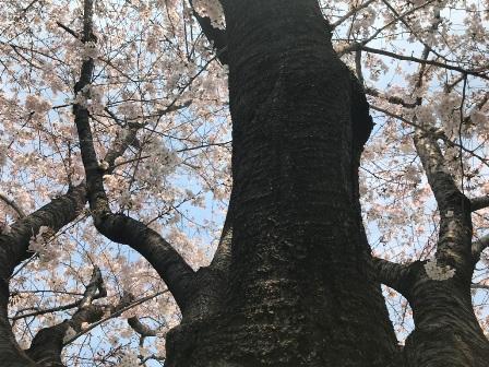 20180327-togoshi1-041.JPG